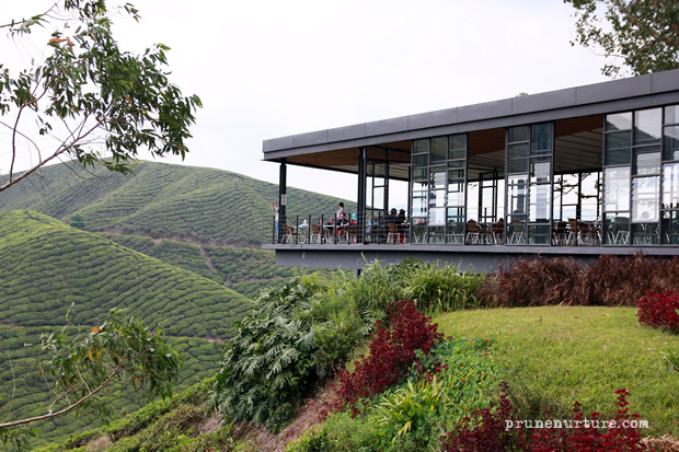 Boh Tea Plantation, Cameron Highlands. Credit: www.prunenurture.com